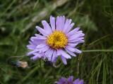 Flowers00141.jpg
