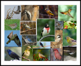 FramedBirdCollage.jpg