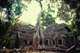 Battle for holy ground (Ta Prohm - Cambodia)
