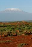 zebrascape (Mount Kilimanjaro) early one morning