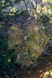 Huge spider web spotted from far away. It was probably 3ft across.