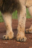 a closeup of his legs, also covered with flies