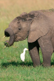 . . . and he twirls his trunk