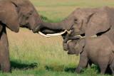 Bull elephant greeting the mom and baby