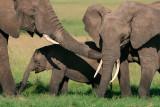 More elephant caresses.