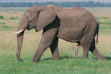 You can't judge a book by it's cover and you can't judge an elephant by the size of his tusks.
