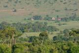 Maasi Mara - do you see the giraffes?
