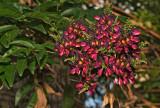 wisteria 14