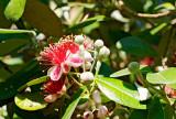 guava 12