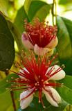 guava 13