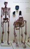 Huxley's Primates Peabody Museum