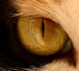 Enter the Eye