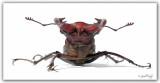 beetle-3.jpg