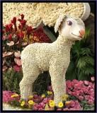 Marys Lil' Lamb