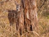 Having a Peek Around the Tree
