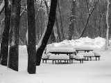 Winter Picnic2