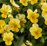Tiny Yellow Flowers.jpg