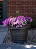 Back Door Flowers