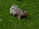 Racoon Squirrel