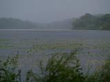 Misty Rain Over Snelling Lake