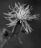 Wild Wild Flower