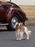 Watch Dog for a 1940 Chevy Coupe