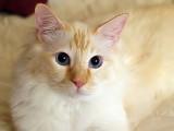 Milo and Those Eyes
