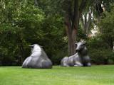 The Cow Couple.jpg