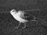 Funny Seagull