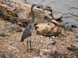 GBH on the MN River