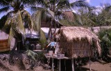 A Vietnamese  Village in the Mekong Delta