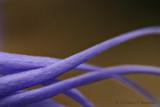 Purple Tentacles
