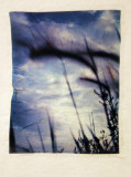 Polaroid Emulsion Transfers