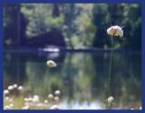 Un fil sur le lac... l'été
