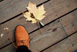 Pot pourri d'automne...