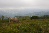 rancho_landscapes