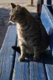 shipyard cat