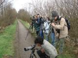 2007 Zwarte Wouw / Black Kite