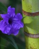 06 Garden Flower next to tree.jpg