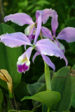 aa purple yellow orchid.jpg