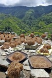 Upland Rice drying in Banaue 02