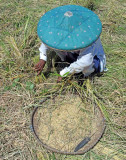 elderly woman scraping for rice grains