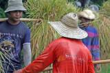 3 guys carrying rice bundles