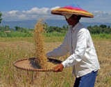 winnowing rice with mountains in background