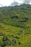 rice terraces 01