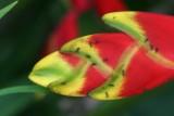 bird of paradise w ants
