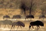 Etosha N.P. /  Kalahari N.P.