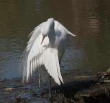 egrets_2007