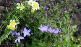 Small corner, small flowers