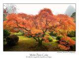 Wide Open Color.jpg